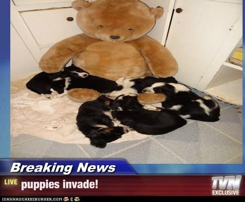 Breaking News - puppies invade!