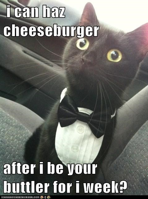 i can haz cheeseburger  after i be your buttler for i week?