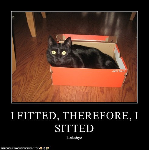 I FITTED, THEREFORE, I SITTED