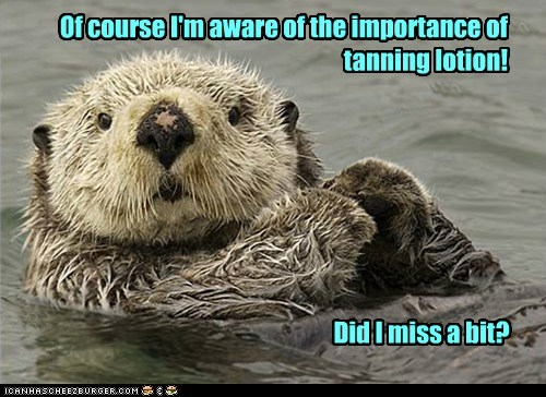face,of course,otters,tanning,light,missed,aware