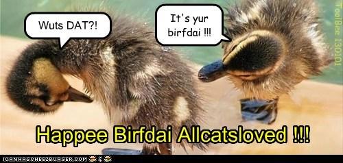 Happee Birfdai Allcatsloved !!!