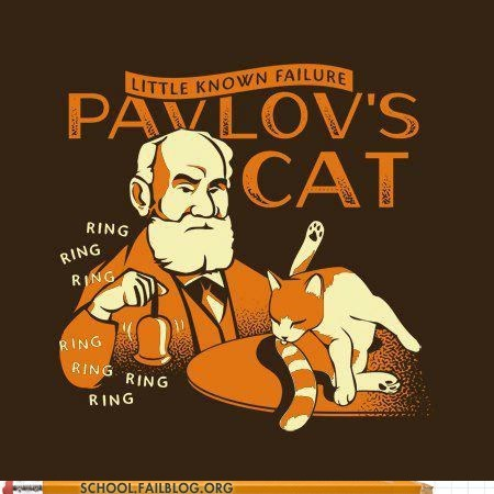 cat,bell,experiment,psychology,pavlov,g rated,School of FAIL,pavlov's bell,Cats