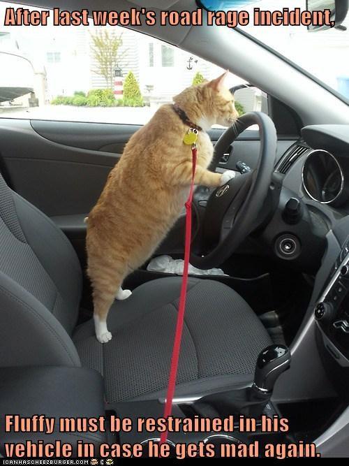 car,captions,road rage,driving,Cats
