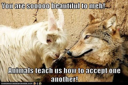 You are sooooo beautiful to meh!  Animals teach us how to accept one another!
