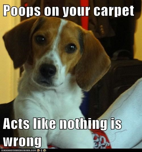 Poops on your carpet  Acts like nothing is wrong