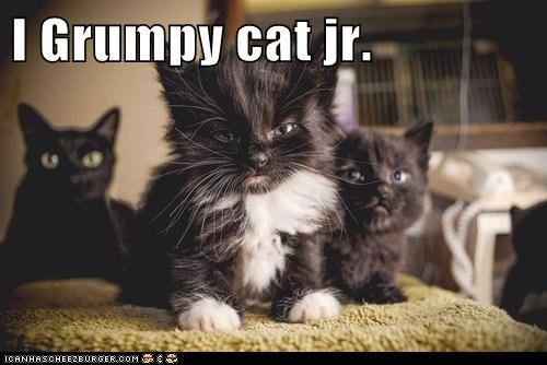 I Grumpy cat jr.
