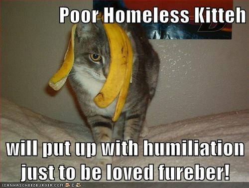 Poor Homeless Kitteh  will put up with humiliation just to be loved fureber!