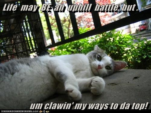 Life  may  BE  an  uphill  battle, but . .               um clawin' my ways to da top!