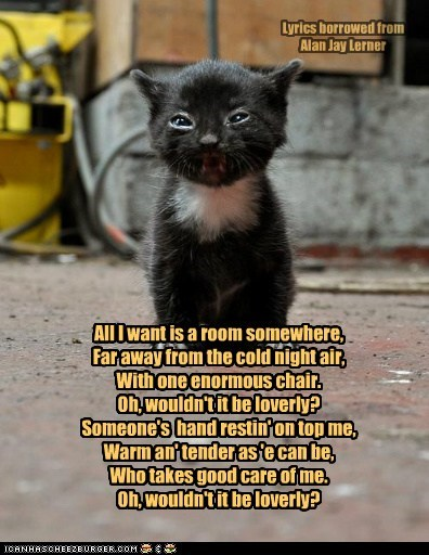 Adopt a Homeless Cat