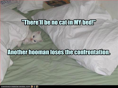 bed,mine,captions,human,Cats
