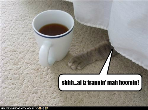 bed,trap,captions,human,coffee,Cats