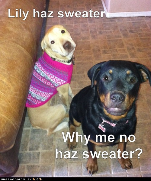 Where my sweater?