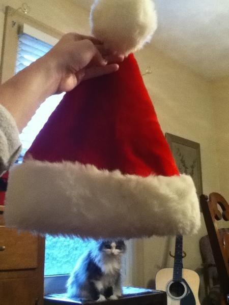 christmas,cat,pets,funny,animals,holidays