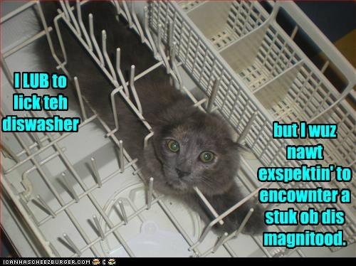 dishwasher,daunting,lick,captions,big,Cats