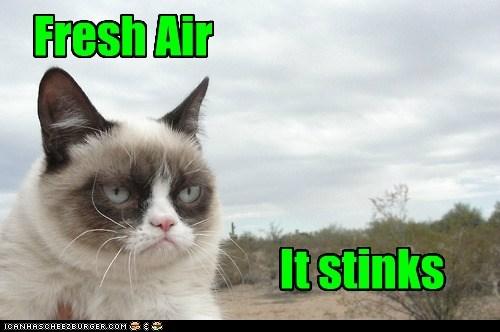 tardar sauce,captions,Grumpy Cat,fresh air,Cats,air