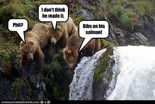 dibs,Staring,bears,waterfall,fell
