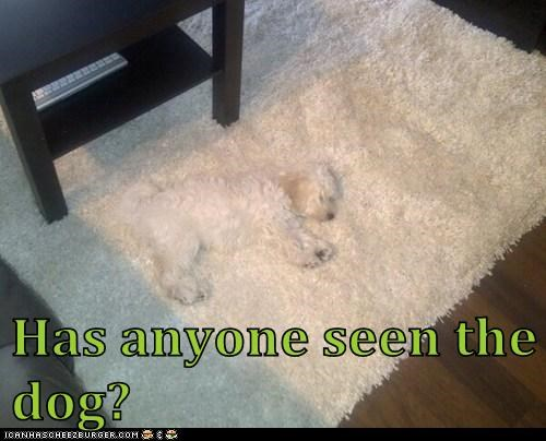Has anyone seen the dog?