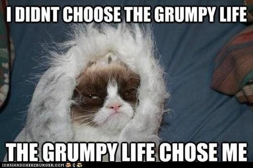 i-didnt-choose-the-thug-life,captions,Memes,grumpy,thug life,Grumpy Cat,tard,Cats