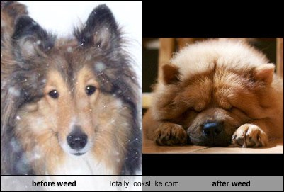 before weed Totally Looks Like after weed