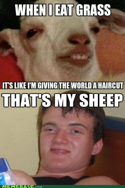 Stoned sheep is stoned...