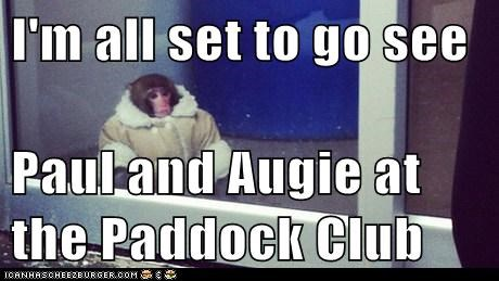 I'm all set to go see  Paul and Augie at the Paddock Club