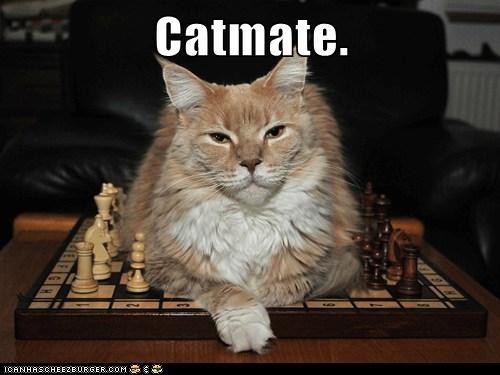 Catmate.