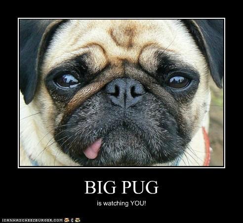 BIG PUG