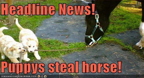 Headline News!  Puppys steal horse!