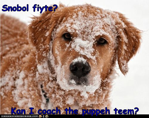 Snobol fiyte?  Kan I coach the puppeh teem?