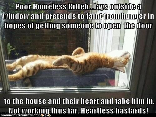 Poor Homeless Kitteh...lays outside a window and pretends to faint from hunger in hopes of getting someone to open  the door   to the house and their heart and take him in. Not working thus far. Heartless bastards!
