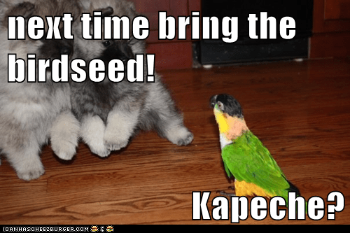 next time bring the birdseed!  Kapeche?