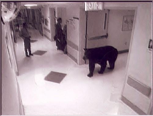 hospital,bear,animals,fail nation,g rated