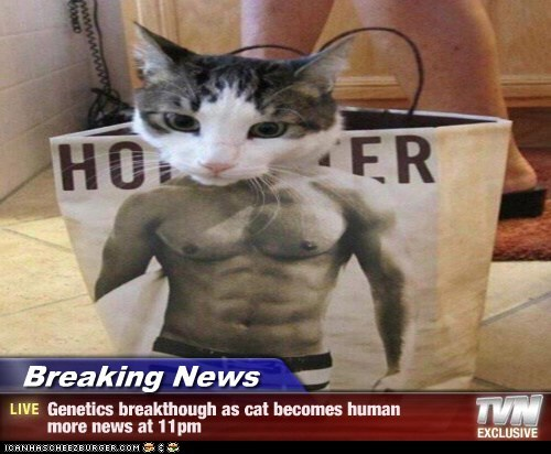 Breaking News - Genetics breakthough as cat becomes human  more news at 11pm