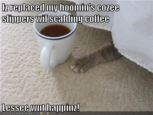 Iz replaced my hoomin's cozee slippers wif scalding coffee  Lessee wut happinz!