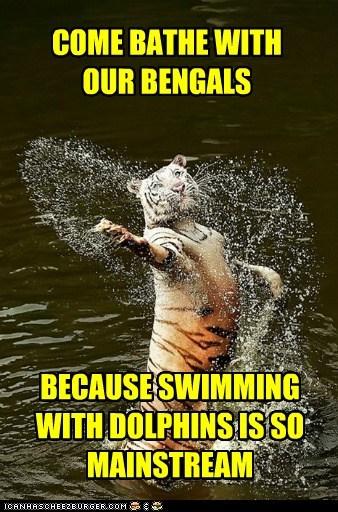 tigers,water,swimming,mainstream,bengals,dangerous,bathing