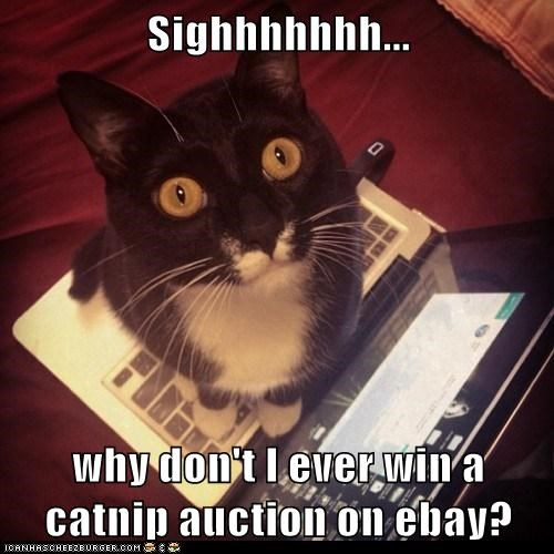 Sighhhhhhh...  why don't I ever win a catnip auction on ebay?