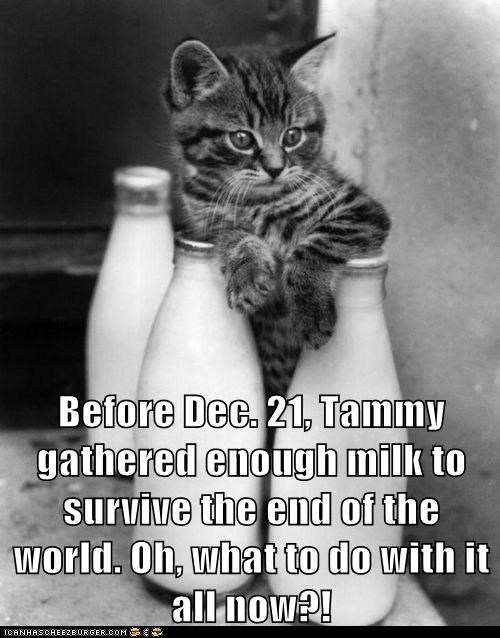 Before Dec. 21, Tammy gathered enough milk to survive the end of the world. Oh, what to do with it all now?!