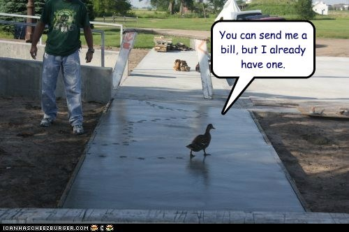 puns,ducks,already,ruined,tracks,bill,footprints,messed up,cement