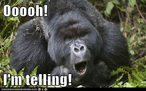 bad,kids,oooooh,gorillas,telling