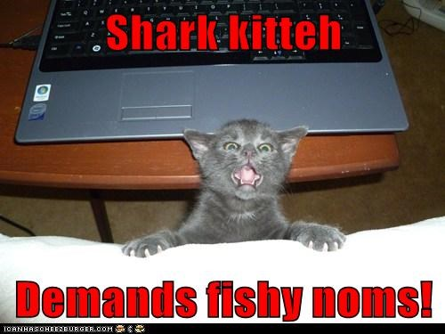 Shark kitteh  Demands fishy noms!