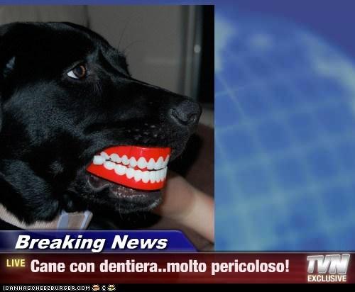 Breaking News - Cane con dentiera..molto pericoloso!