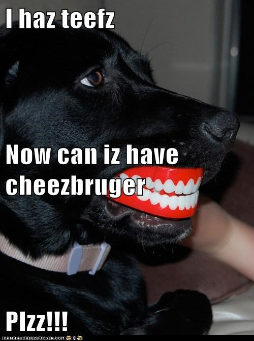 I haz teefz  Now can iz have cheezbruger Plzz!!!