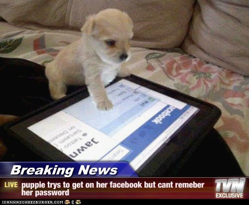 Breaking News - puppie trys to get on her facebook but cant remeber her password
