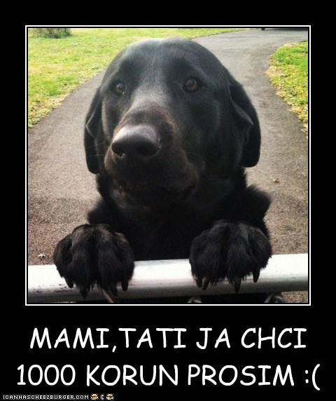 MAMI,TATI JA CHCI  1000 KORUN PROSIM :(