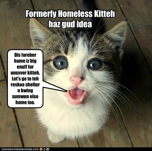 Generous Formerly Homeless Kitteh.
