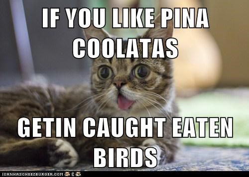 IF YOU LIKE PINA COOLATAS  GETIN CAUGHT EATEN BIRDS