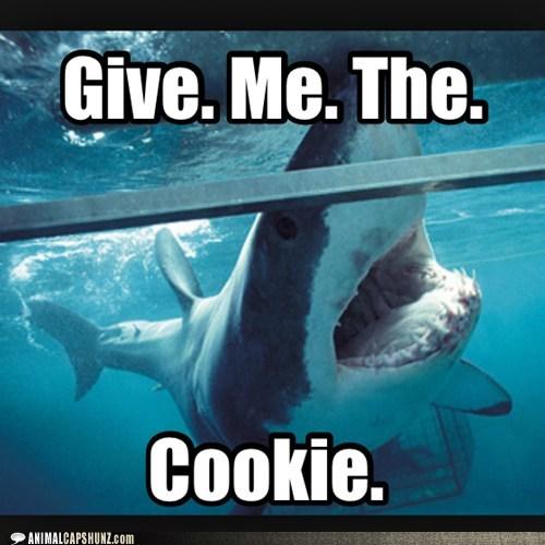 demanding,tank,give me,sharks,cookies