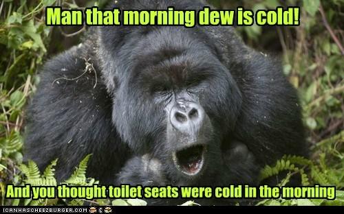 toilet seats,dew,cold,gorillas,morning