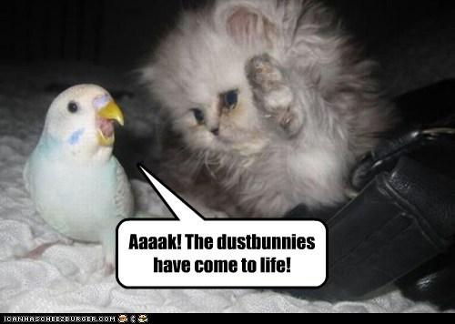 parakeets,life,kitten,dust bunnies,scared,Cats