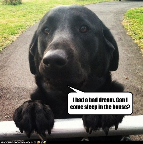 dogs,house,fence,bad dream,sleep with you,scared,outside,Black Lab